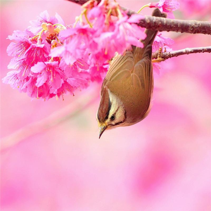 Купить Льняное саше Птичка в цветах - аромат