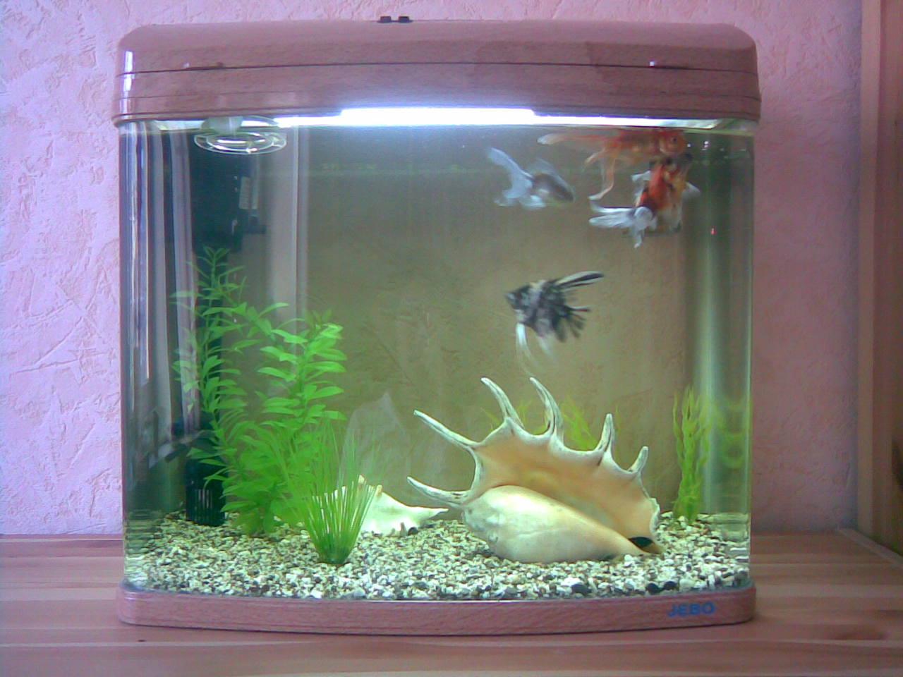 Аквариумные рыбки фото в домашних условиях
