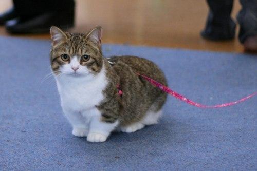 разная порода кошек с фото