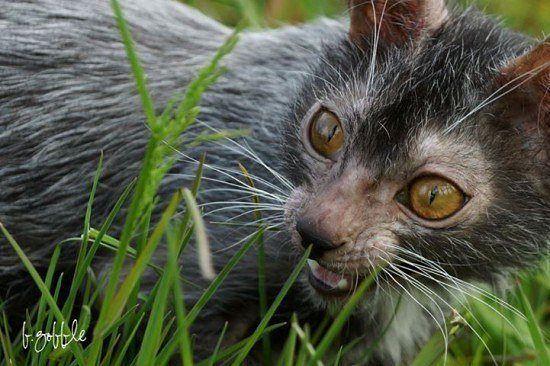 Фото кота оборотня