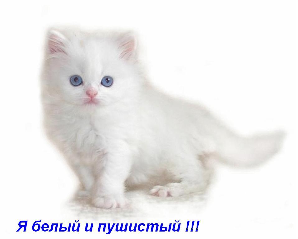 Картинки котят и кошек скачать бесплатно