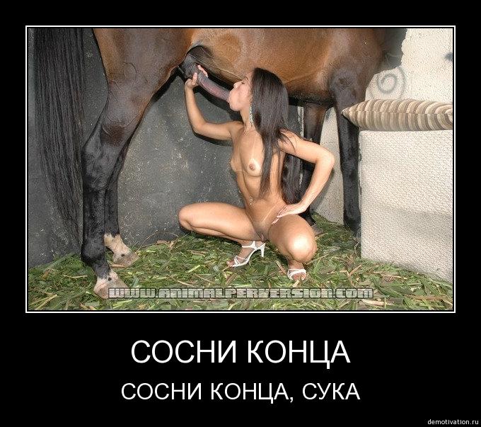 polizhi-mne-a-ya-u-tebya-otsosu